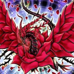 Black Rose Dragon