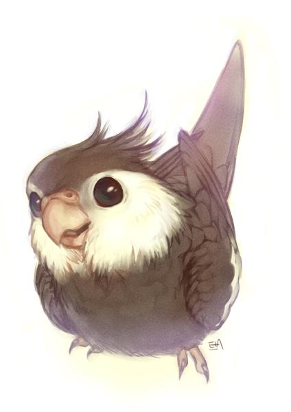 cute cockatiel drawing