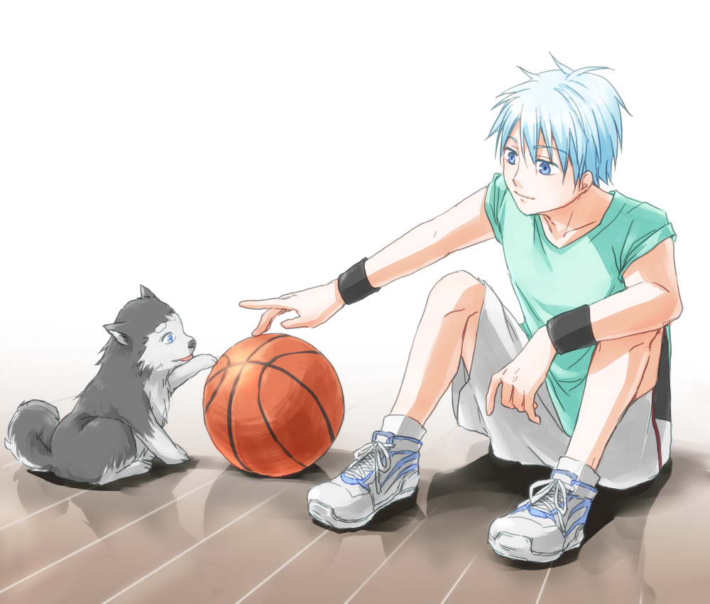 Download Kuroko No Basuke Anime Adorable Dog - Kuroko  Best Photo Reference_316281  .jpg