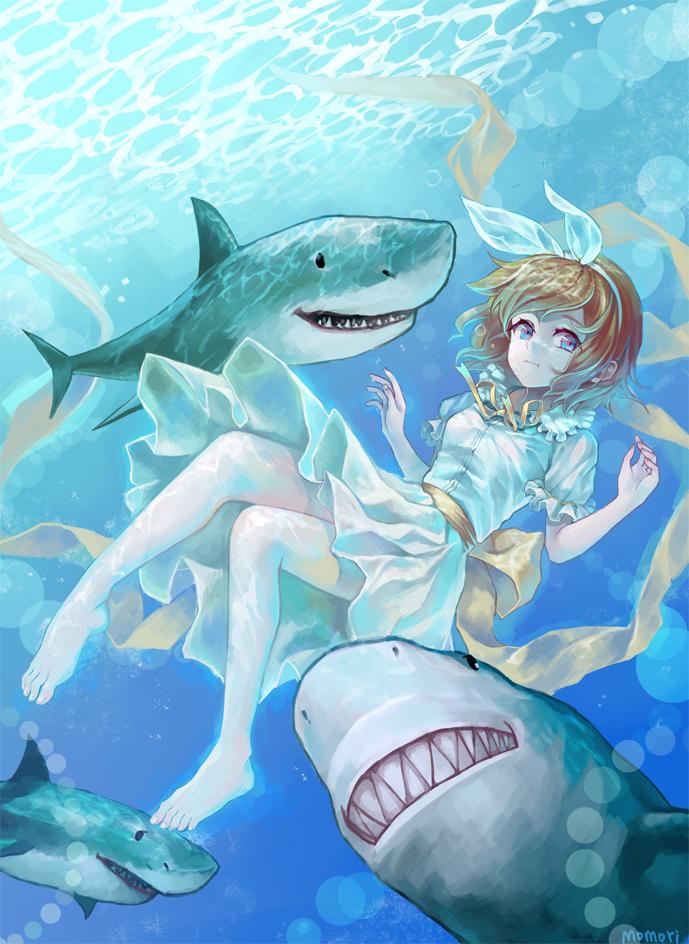Акула картинка аниме