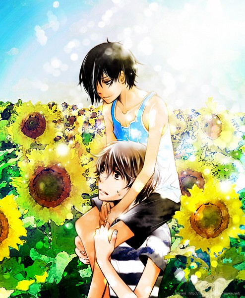 Tags: Anime, Sunflower, Carry, Summer Wars, Koiso Kenji, Ikezawa Kazuma, Yellow Flower
